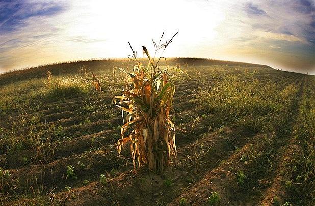 agricultura-cambio-climatico.jpg